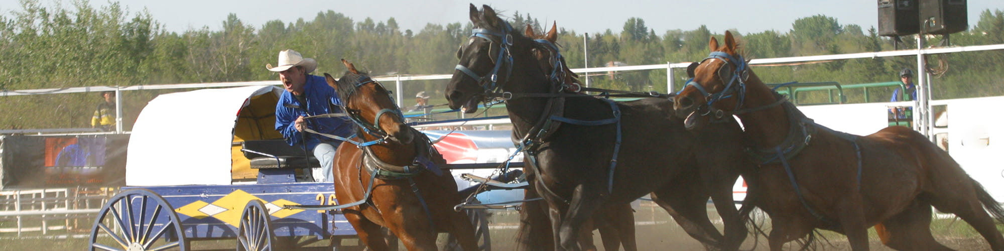 chuckwagon racing team